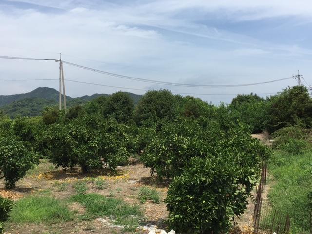 【しまなみ海道のご紹介:生口島】-平山郁夫美術館、ビーチ、柑橘類の広がる風景など-