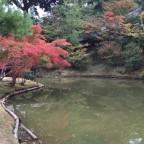 10月22日時点の「京都の紅葉」の状況はどうなのでしょうか?【おすすめのスポットも考察】 -リピーターのための、おすすめ京都の穴場ガイド-