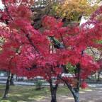 境内が紅葉づくし! 魅力的な紅葉スポット【真如堂】 -リピーターのための、3度目のおすすめ京都の穴場ガイド-