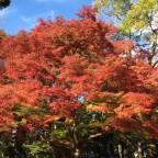 あと1週間で紅葉の見頃です! 11月11日現在の【京都の紅葉】状況(1) -リピーターのための、3度目のおすすめ京都の穴場ガイド-