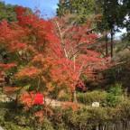 あと1週間で紅葉の見頃です! 11月11日現在の【京都の紅葉】状況(2) -リピーターのための、おすすめ京都の穴場ガイド-
