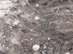 2016年最初の本格的家庭菜園:「ジャガイモ」の植え付けをしました! ‐ずぼらでもできる家庭菜園‐