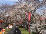 中国やまなみ街道で行く! 「斐伊川堤防桜並木」など三刀屋木次IC界隈には桜が溢れています!