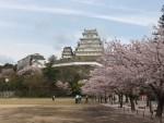 広島県辺りから「青春18きっぷ」で行くおすすめの【春の旅:桜!】-青春18きっぷでスローな旅をしよう-