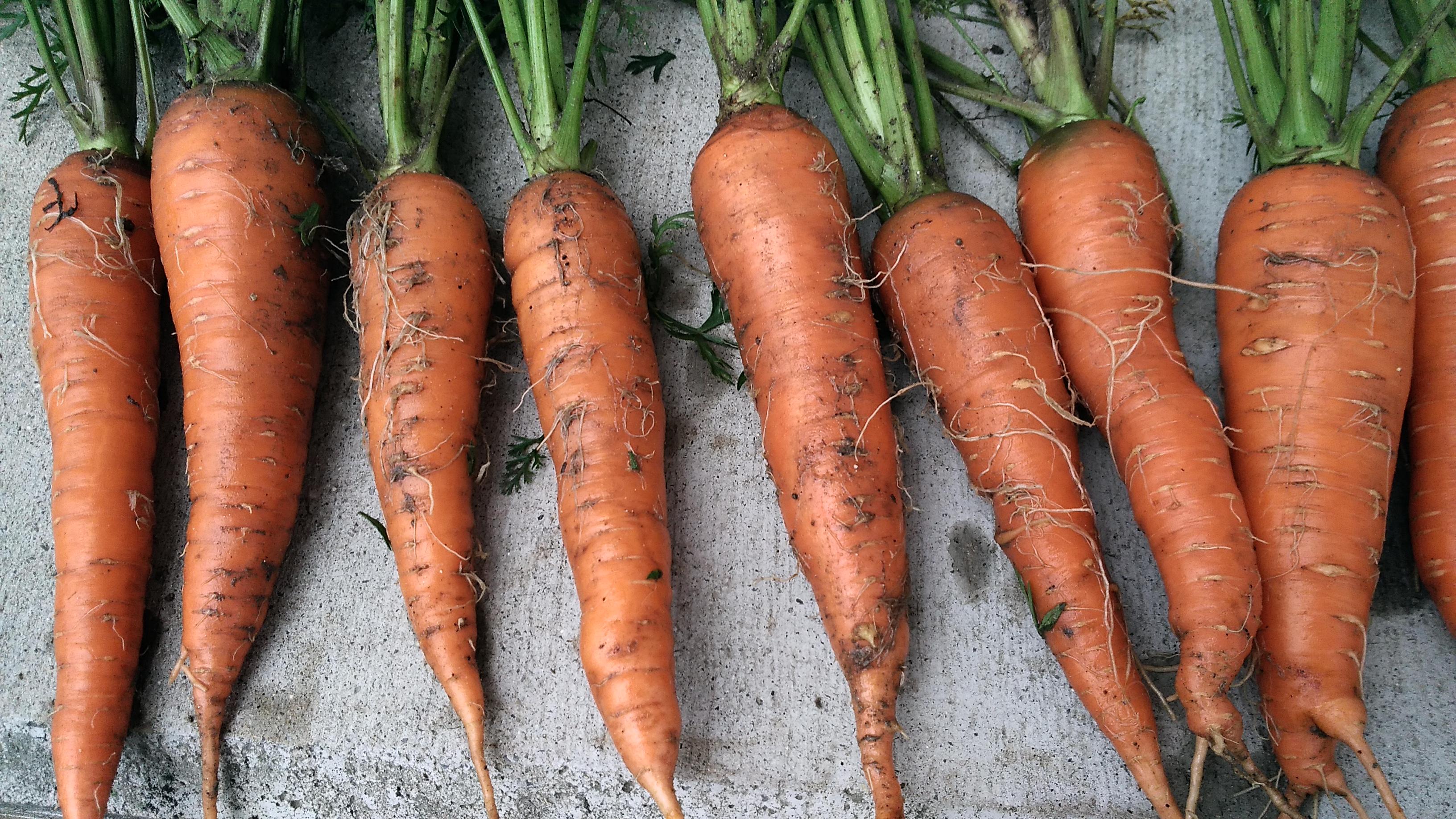 2018年に植える!【おすすめ春夏野菜】と【我が家で植える春夏野菜】のご紹介です。 ーずぼらでもできる家庭菜園ー