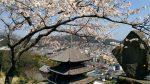 尾道市:千光寺公園の【桜】は、壮観ですね!