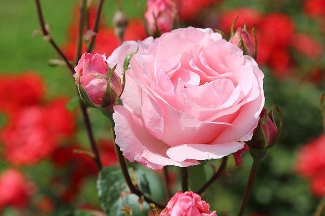 7月22日:広島で【美しく若々しく!いのちの輝きコース】を開催します! 坂本さんがいらっしゃいます。「日本初」開催ですよ!