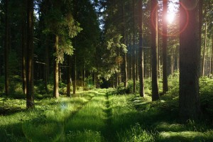 forest-458324_640